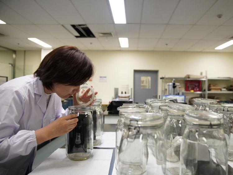 Les testeurs doivent passer des tests d'odeur aveugle pour obtenir le travail