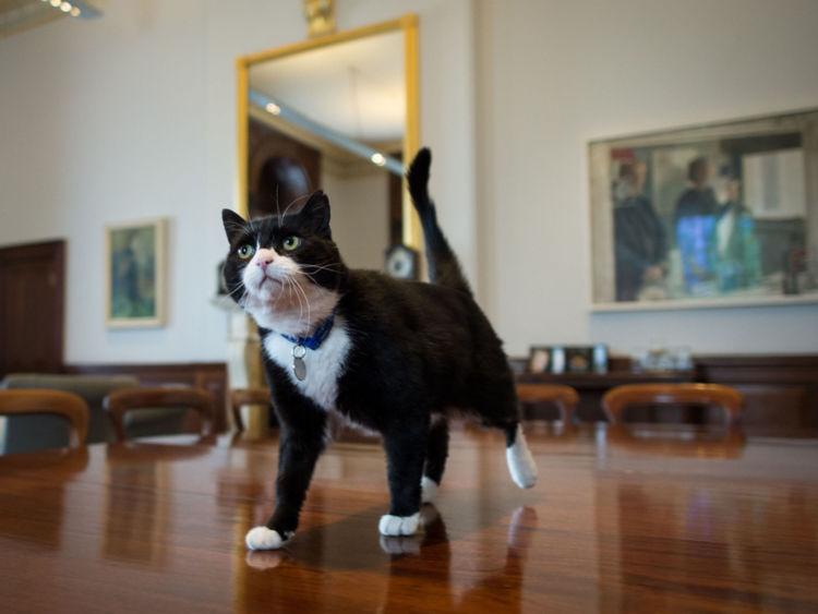 Palmerston le ministère des Affaires étrangères