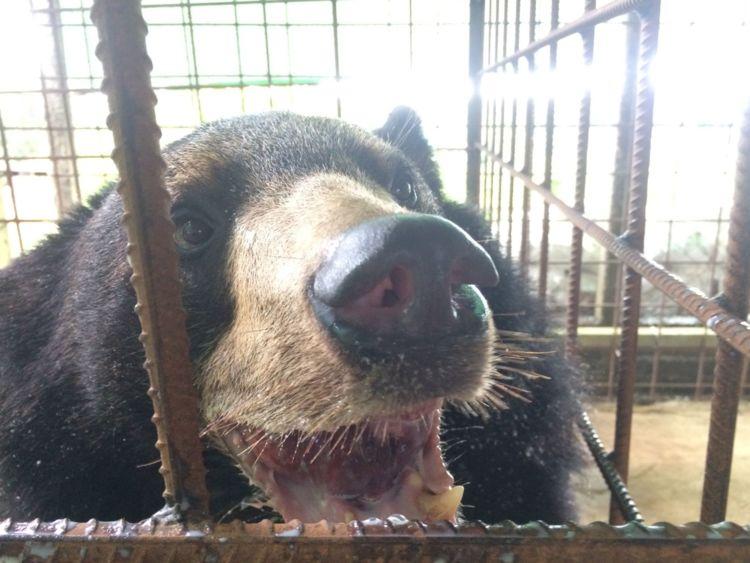 Nyan htoo à la suite de l'opération
