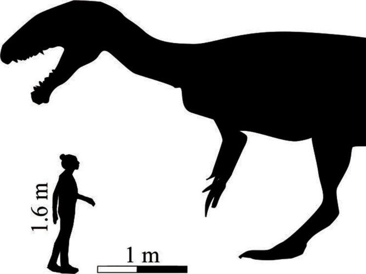 """Image de """"megatherapod"""" sur les empreintes trouvées au Lesotho"""