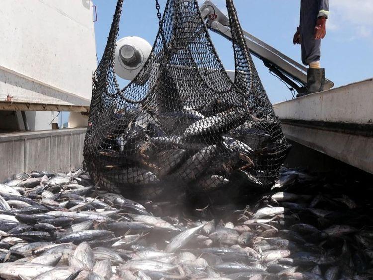 Les stocks de pêche sont surpêchés