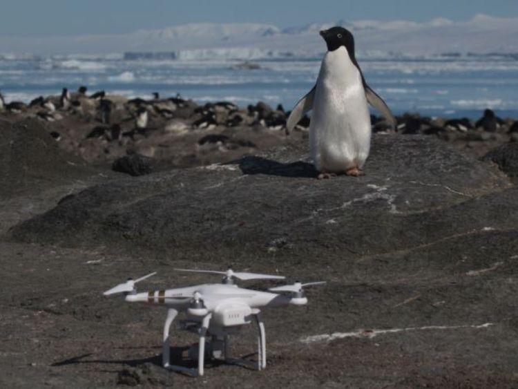 """Danger Islands Expedition Image (4): """"Un pingouin et un quadricoptère Adélie sur l'île Brash, les îles Danger, Antarctique"""" Pic: Stony Brook University [19659006] Image: </span><br />         <span class="""