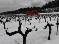 Vignobles à Meounes-les-Montrieux, sud de la France