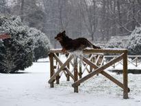 Chien saute d'une clôture en bois dans le jardin Sempione après une chute de neige à Milan, Italie