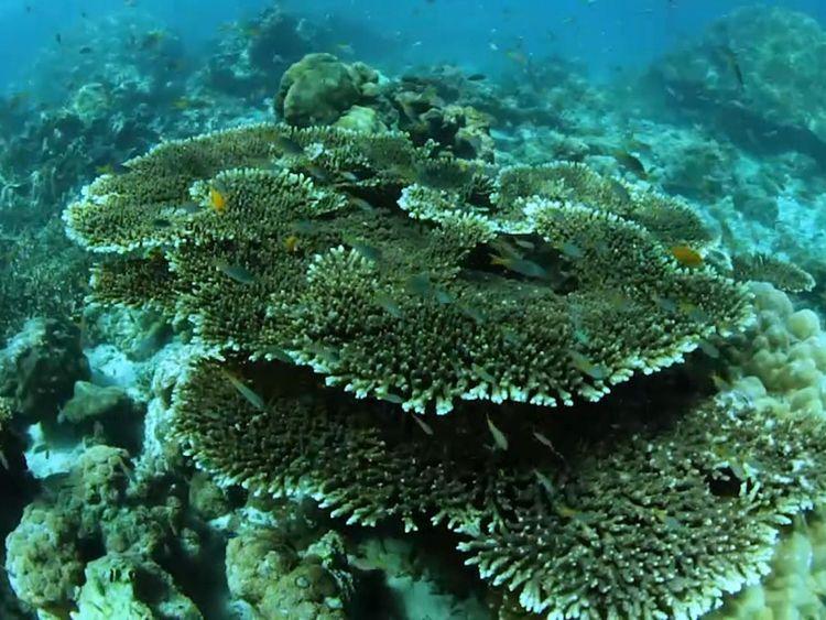 Depuis que le film a été réalisé, 80% du corail dans la baie est mort