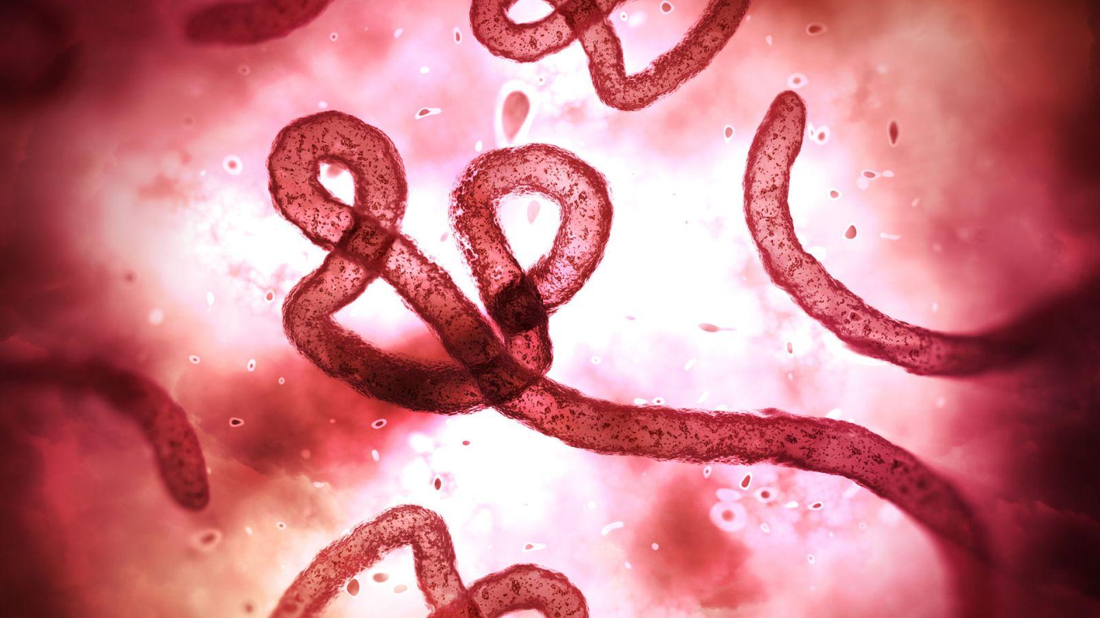 Le nombre de décès dus à des coronavirus dans le monde dépasse les 60 000 morts alors que Trump met en garde contre une `` semaine difficile '' à venir