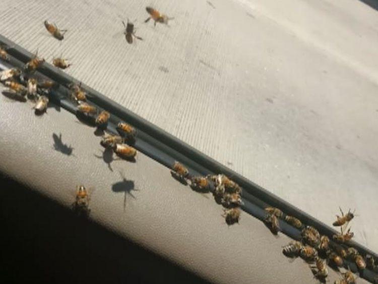 Environ 3.000 abeilles ont essaimed le véhicule [19659005] Image: </span><br />         <span class=