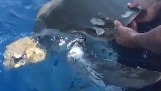 Les gardes-côtes ont sauvé une tortue qu'ils ont repérée en détresse lors d'une opération de lutte contre les stupéfiants dans l'est du pays. Océan Pacifique,
