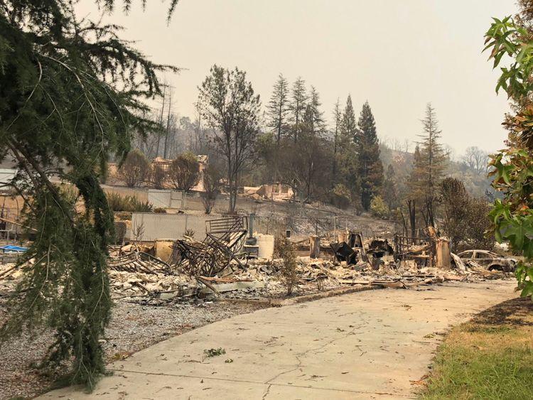 Beaucoup de grands arbres ont survécu mais beaucoup de maisons n'ont pas