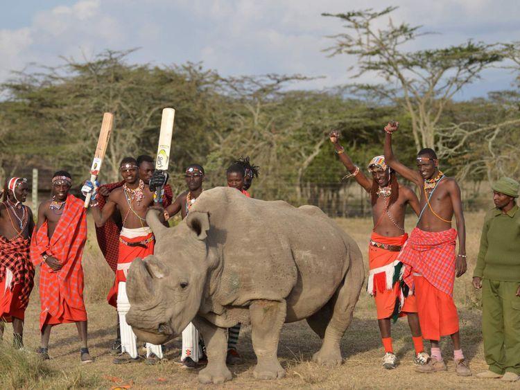 Les guerriers Maasai posent avec le Soudan, le seul mâle des trois dernières sous-espèces de rhinocéros blancs de la planète
