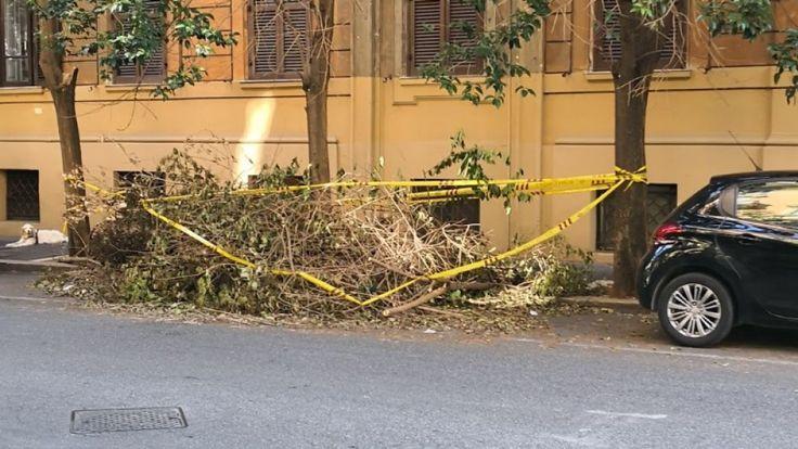 Arbre tombé à Rome