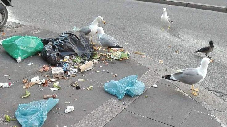 Mouettes se régalant des ordures non collectées de Rome. Pic: Roma Fa Schifo