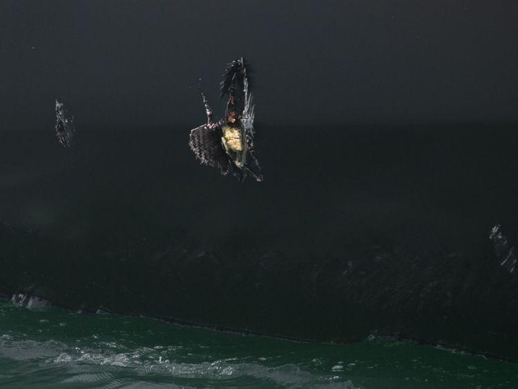 La coque du monocoque d'Alex Thomson a été endommagée au large de Pointe-à-Pitre en Guadeloupe