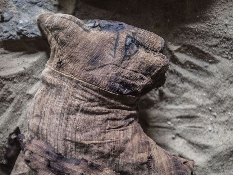 Les chats ont été momifiés comme des offrandes religieuses dans l'Égypte ancienne