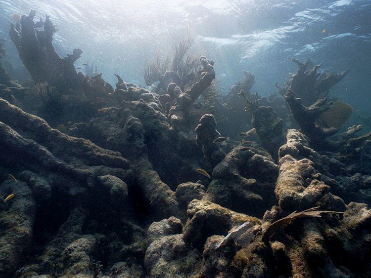 Les changements de la température de l'eau de mer ont provoqué le blanchiment et de la grande barrière de corail