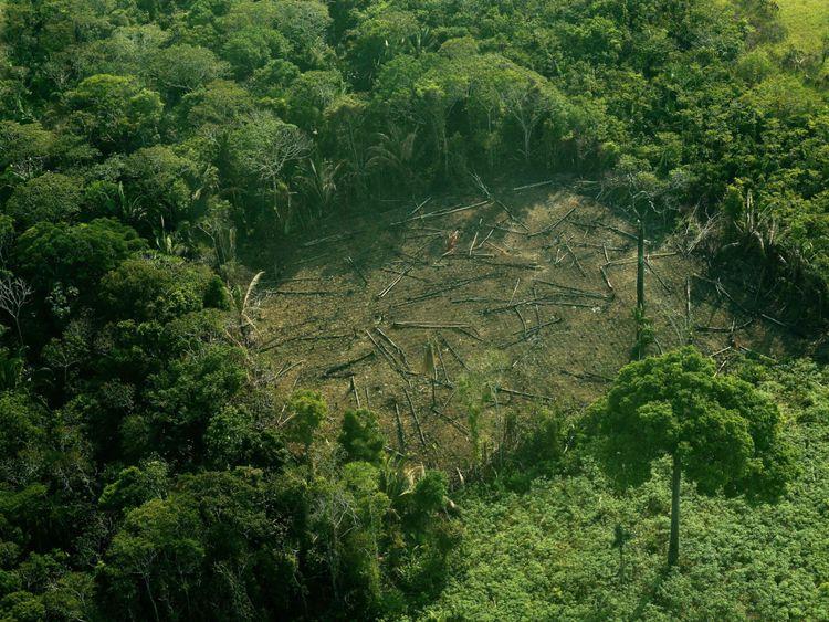 Réduire la production de viande réduirait la déforestation