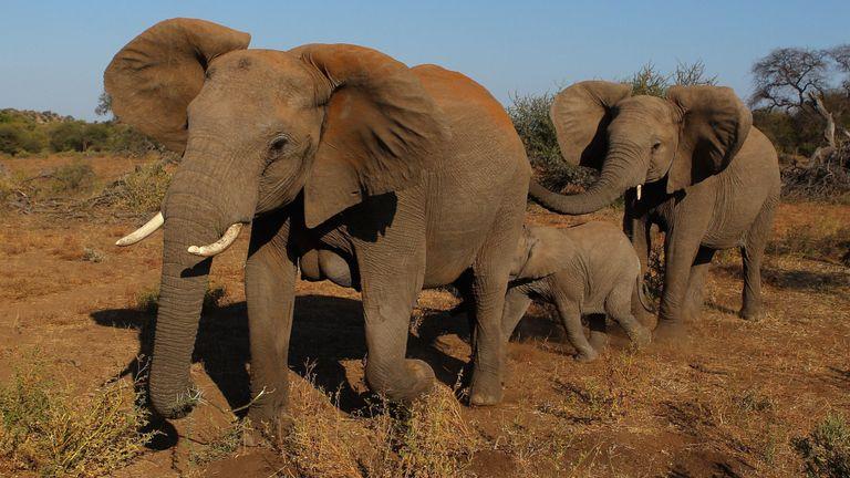Selon le WWF, le commerce illégal d'espèces sauvages représente environ 15 milliards de livres sterling