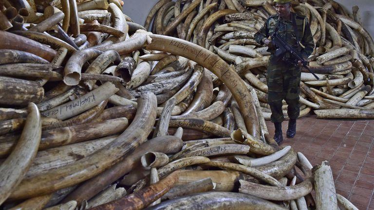 Les campagnes contre l'ivoire n'ont pas mis fin au commerce