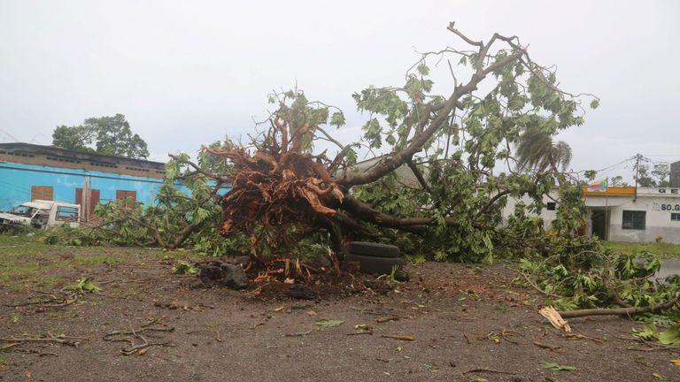 Un arbre à Moroni abattu par le cyclone Kenneth