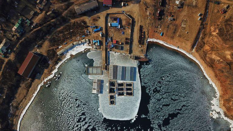 TOPSHOT - Sur cette vue aérienne prise le 22 janvier 2019, des mammifères marins capturés sont observés dans des enclos dans une installation de rétention dans la baie de Srednyaya, dans la ville de Nakhodka, en Extrême-Orient.