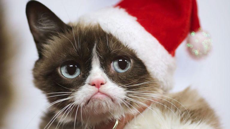 Grumpy Cat arrive à la 84ème parade annuelle de Noël à Hollywood dans la section hollywoodienne de Los Angeles, Californie, le 29 novembre 2015