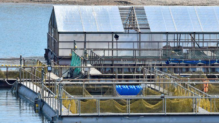 Une vue des enclos avec près de 100 baleines détenues captives