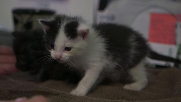 Un des chatons qui ont survécu au voyage. Pic: San Diego Humane Society