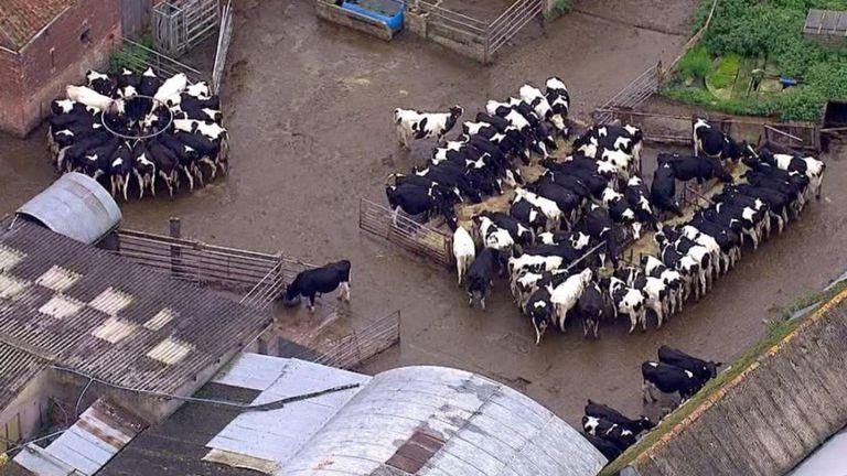 La consommation de viande a chuté de 3% au cours des 20 dernières années, mais nous avons toujours un énorme appétit pour le bœuf.
