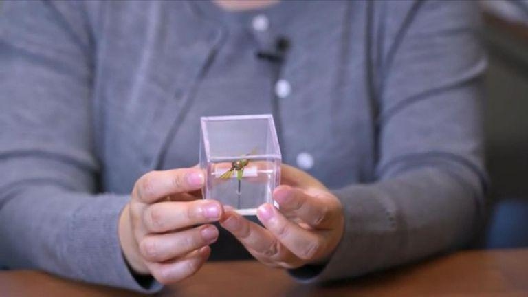 L'équipe a inventé un colibri robot encore plus petit