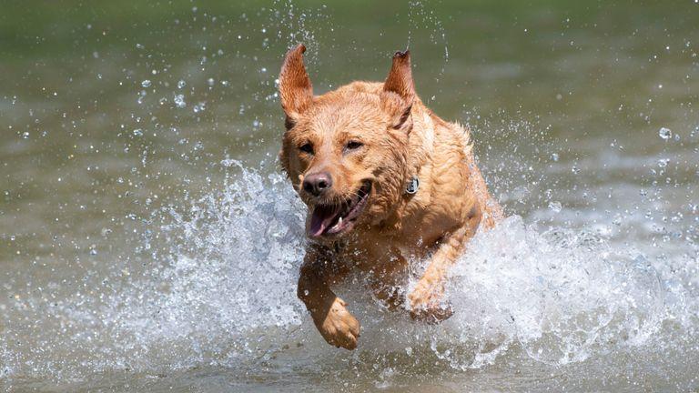 Les chiens et les humains ont cherché un soulagement de la chaleur en Allemagne