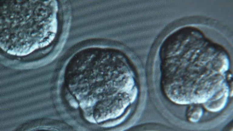 Embryons humains