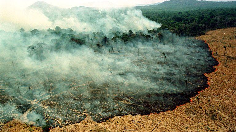 Un incendie détruit une forêt à Apiau, à 120 km de Boa Vista, capitale de l'État de Roraima.