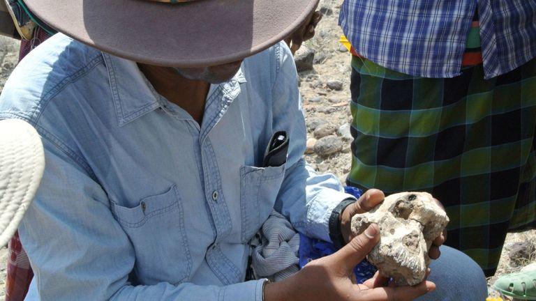 Le docteur Yohannes Haile-Selassie tient le crâne. Pic: Musée d'histoire naturelle de Cleveland