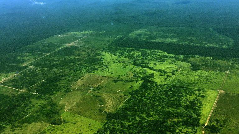 Rapport spécial: Nouveau climat - La forêt amazonienne en crise & # 39;