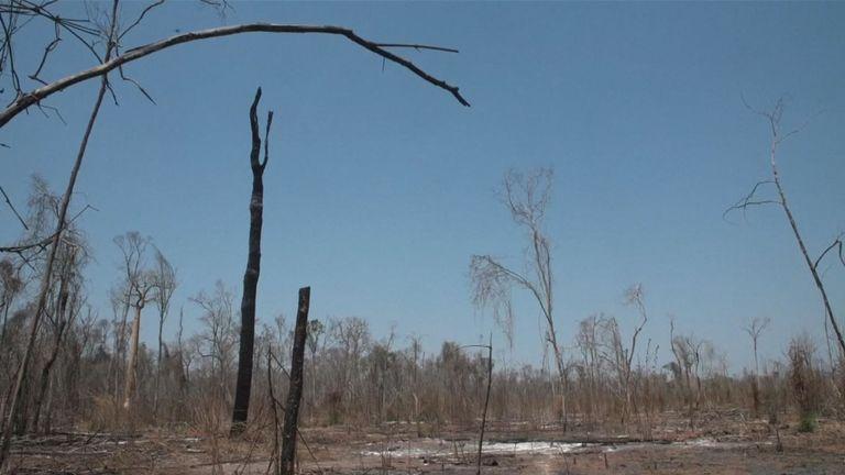 La forêt a été détruite au cours des 20 dernières années