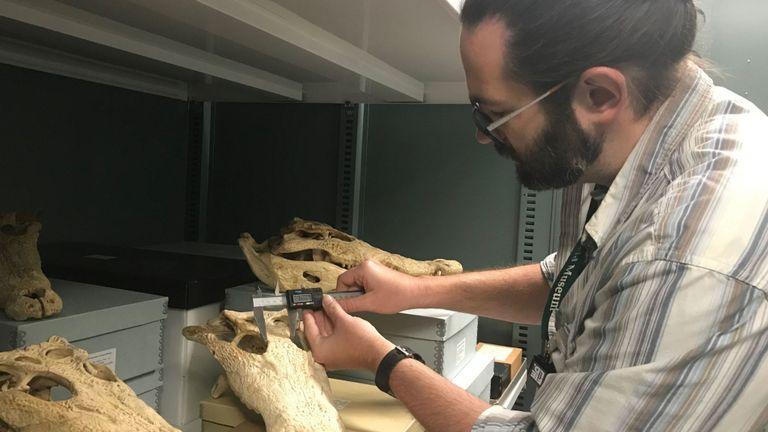 Les chercheurs souhaitent que de nouvelles évaluations de la conservation soient mises en place pour les crocodiles