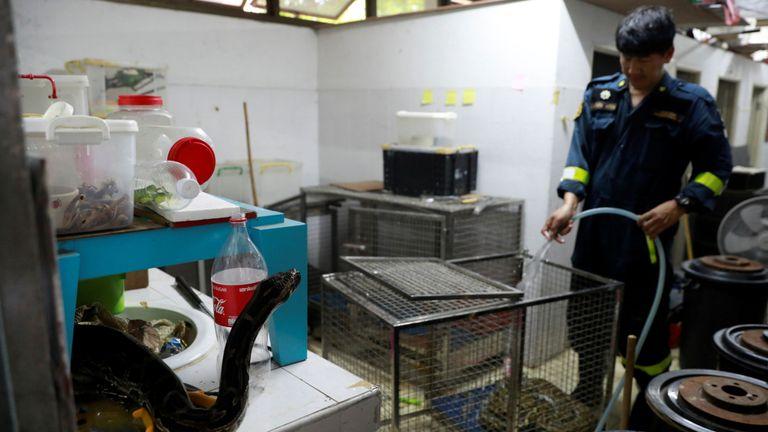 """Le pompier Pinyo Pukpinyo, dit """"lutteur de serpents"""", nettoie une cage à serpents dans une caserne de pompiers à Bangkok, Thaïlande, le 3 juillet 2019"""