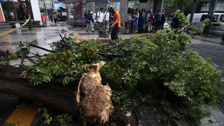 Un membre de l'équipe de secours sud-coréenne libère la branche d'un arbre tombé sur la route alors que le typhon Lingling soufflait très fort le 07 septembre 2019 à Séoul, en Corée du Sud