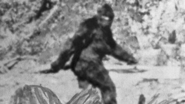 La photo montre ce que Roger Patterson, ancien cavalier du rodéo, a déclaré être la version américaine de l'Abominable Snowman. Il a ajouté que des photos de la créature, estimées à 7 pieds 1/2, avaient été prises au nord-est d'Eureka, en Californie.