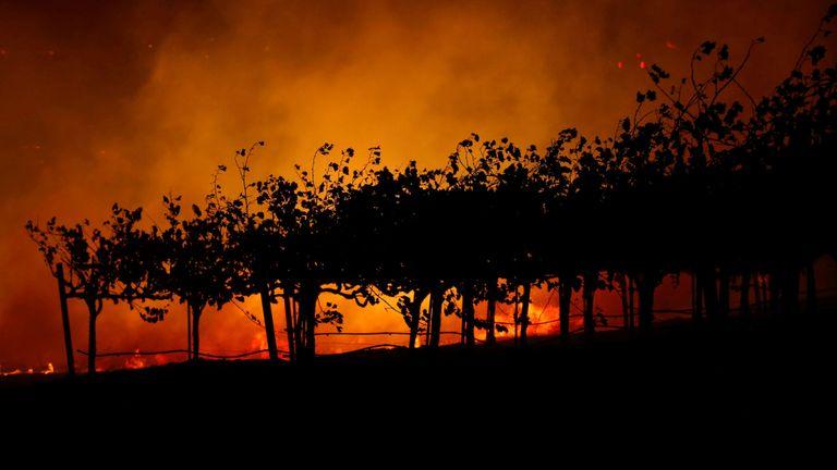 Les célèbres vignobles du nord de la Californie sont menacés