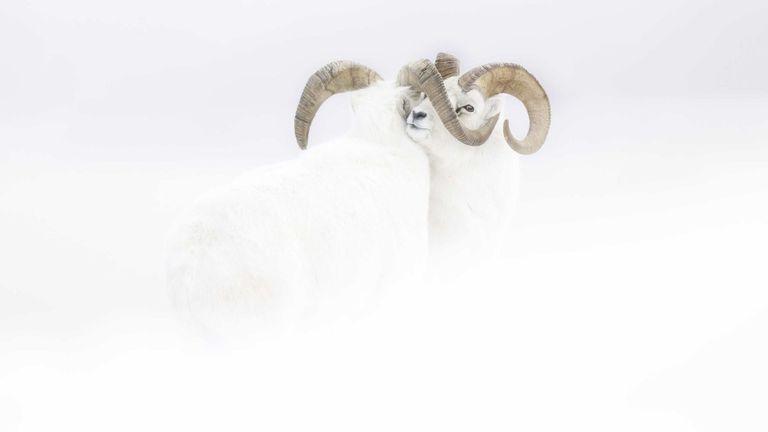 Pic: Jeremie Villet / Photographe animalier de l'année