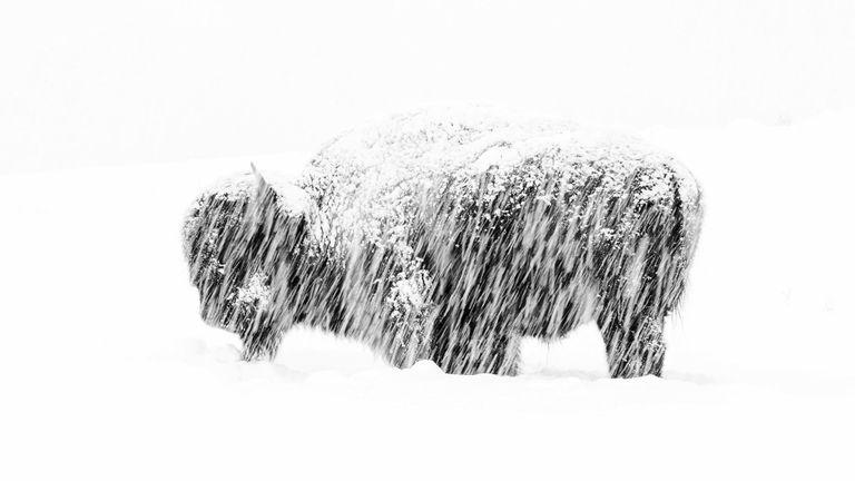 Pic: Max Waugh / Photographe animalier de l'année
