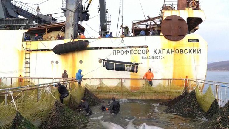 La Russie déclare avoir achevé ses opérations pour libérer le dernier des baleines capturées dans la nature