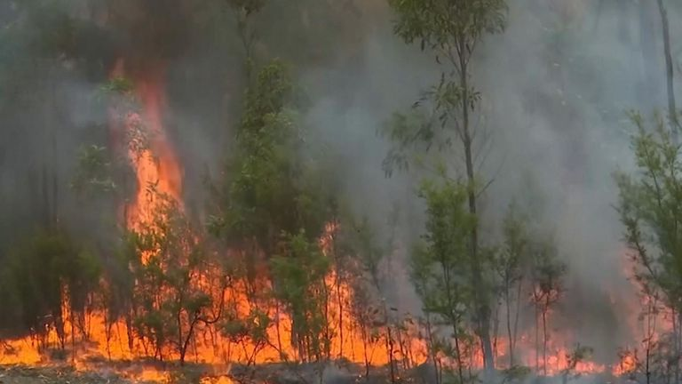 Le service d'incendie rural de la Nouvelle-Galles du Sud a tenté de contrôler l'incendie de l'incendie de Gospers Mountain à proximité qui menaçait les communautés de Hawkesbury et de Lithgow.  Les conditions d'incendie se sont assouplies sur certains des principaux fronts qui brûlent en Australie dimanche 22 décembre après un changement de temps frais. Les pompiers tentent de contenir les incendies avant le retour prévu de conditions plus chaudes à la fin de la semaine.