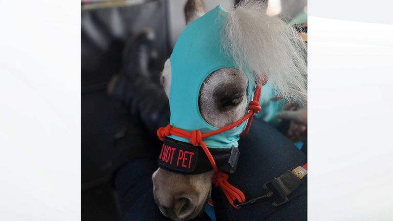Fred portait une tenue spéciale. Pic: Facebook