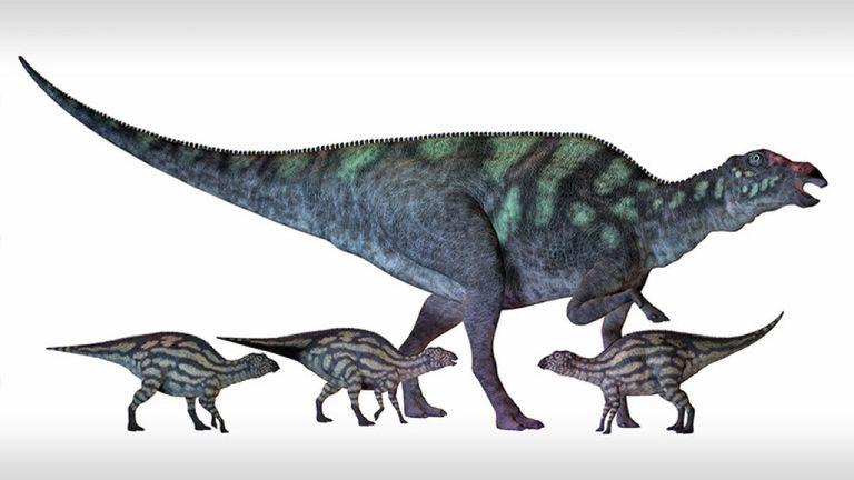 Maiasaura est un grand dinosaure à bec de canard qui vivait en Amérique du Nord au Crétacé, illustré ici avec plusieurs nouveau-nés.
