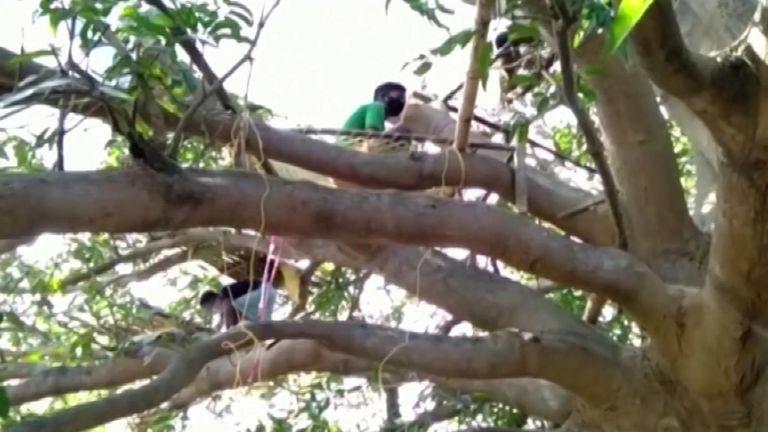 Manquant d'espace à la maison, certains villageois qui s'auto-isolent ont pris les arbres pour protéger leurs familles et leurs voisins