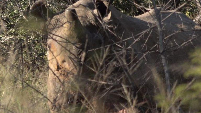 Un certain nombre d'animaux ont été retirés de la réserve