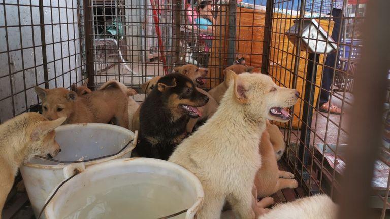 Chiens détenus dans une cage au marché.  Pic: Humane Society International