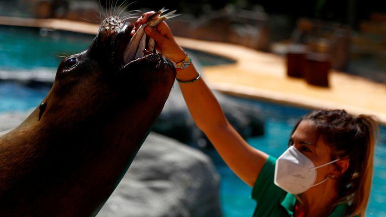 Le zoo de Madrid a rouvert ses portes